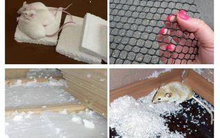 Защита пенопласта от грызунов: советы