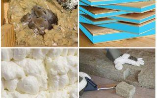 Грызут ли мыши пенопласт: как защитить его?